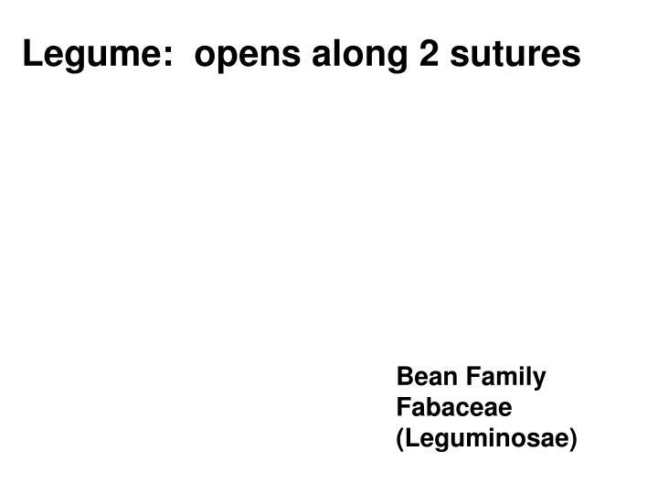 Legume:  opens along 2 sutures