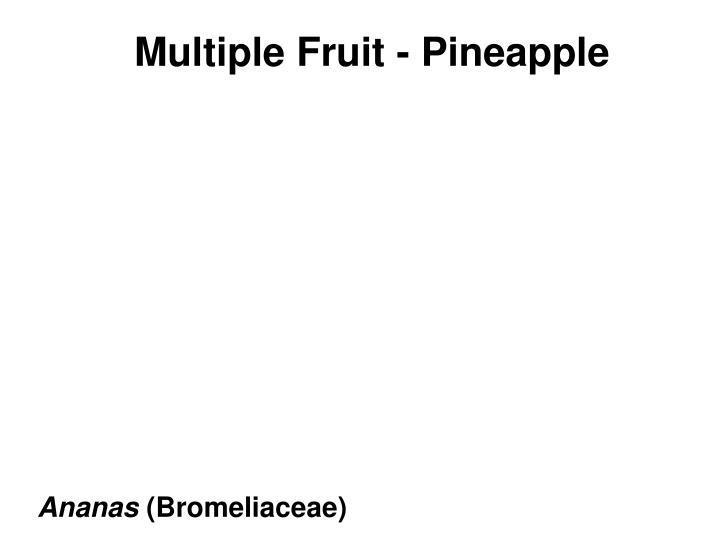 Multiple Fruit - Pineapple