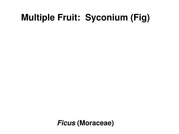 Multiple Fruit: