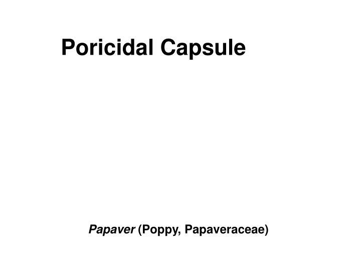 Poricidal