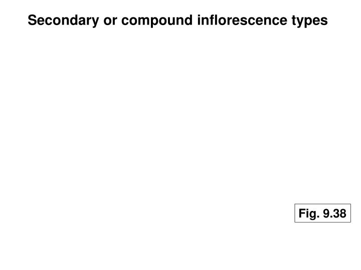 Secondary or compound inflorescence types
