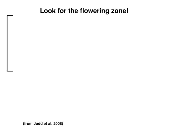 Look for the flowering zone!