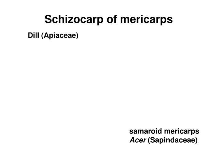 Schizocarp of mericarps