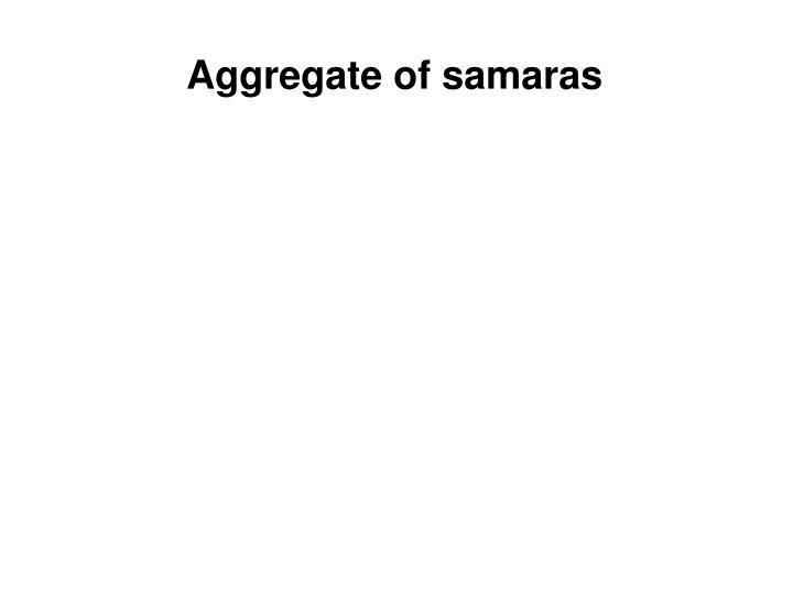 Aggregate of samaras