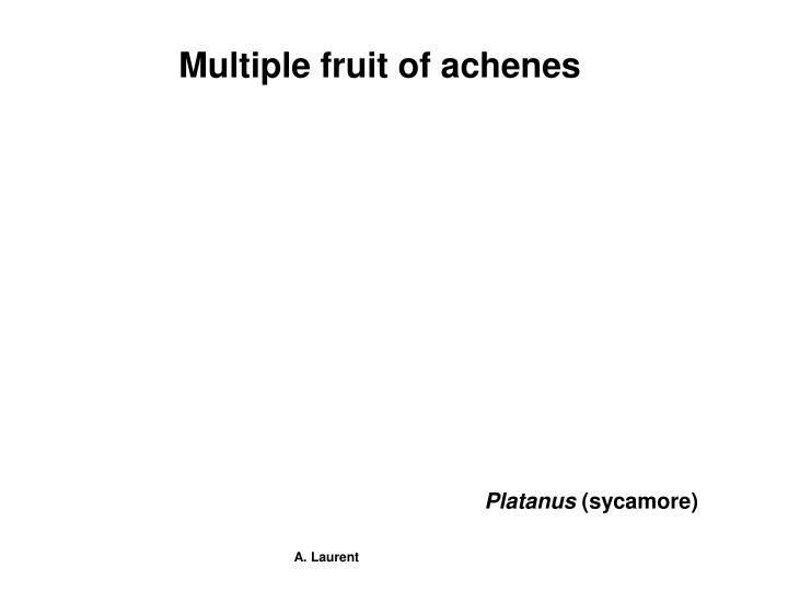 Multiple fruit of