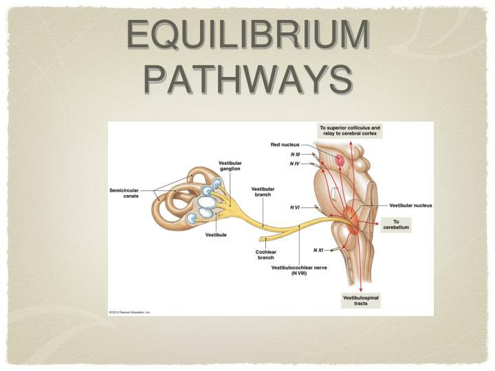 EQUILIBRIUM PATHWAYS