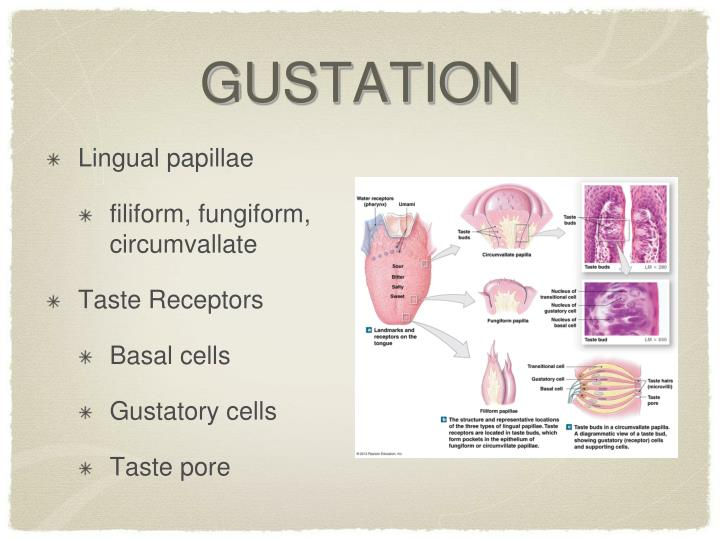 GUSTATION