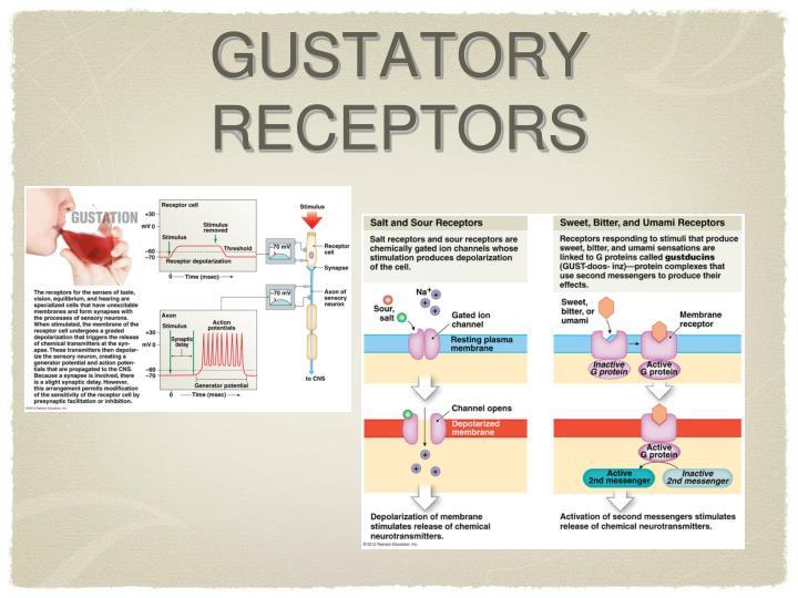 GUSTATORY RECEPTORS