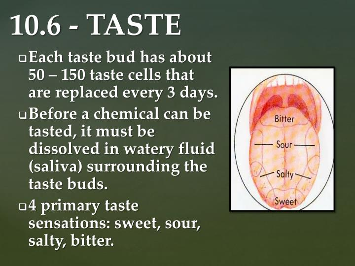 Each taste bud has about 50 – 150 taste cells that are replaced every 3 days.