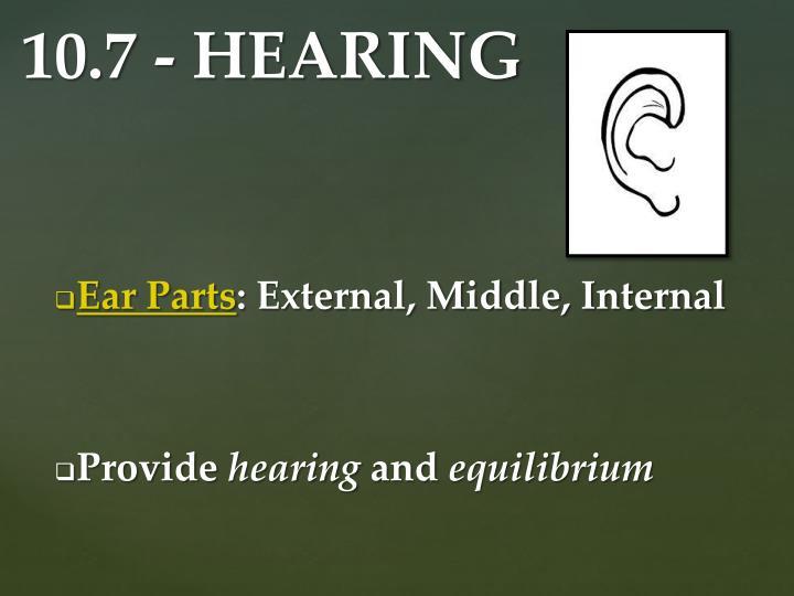 Ear Parts