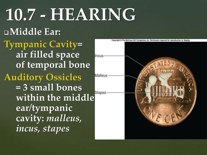 Middle Ear: