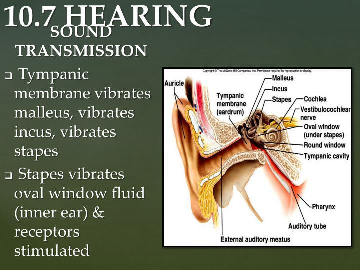SOUND TRANSMISSION