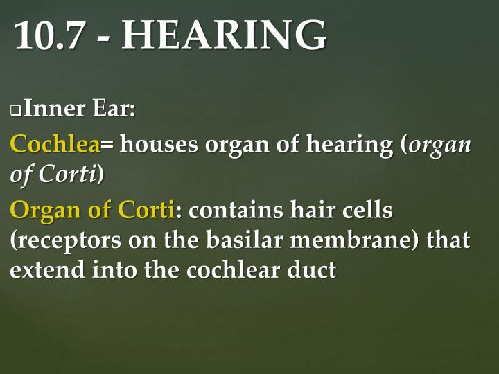 Inner Ear: