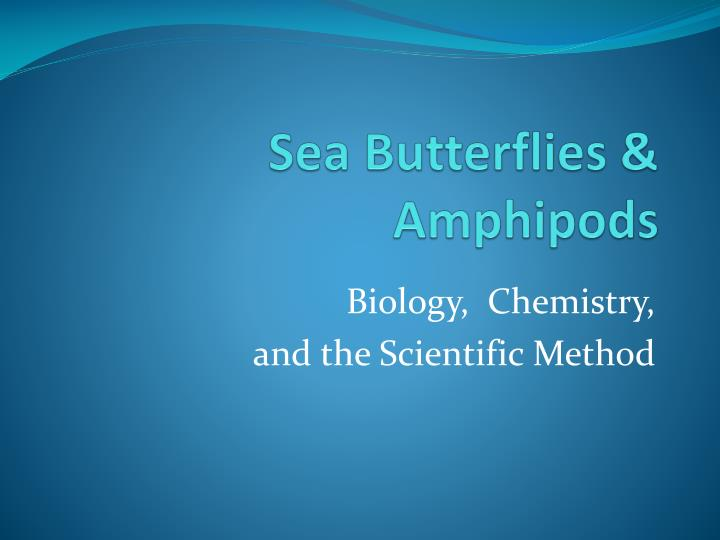Sea butterflies amphipods