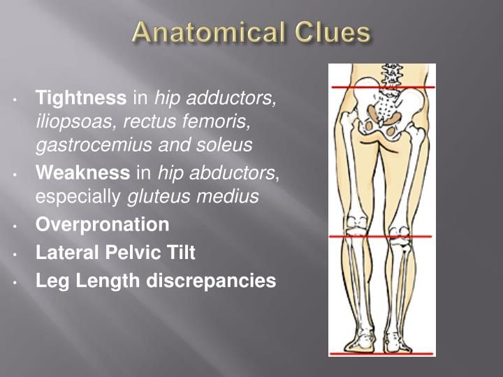 Anatomical Clues