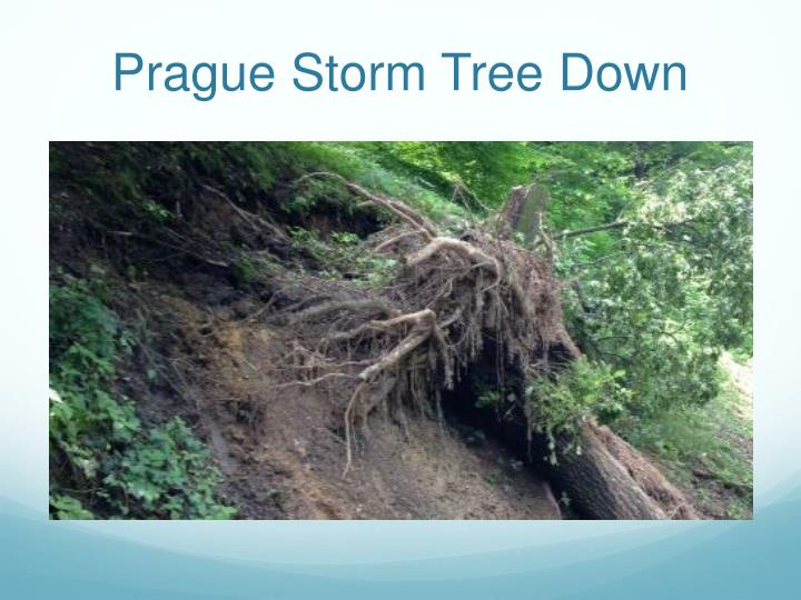 Prague Storm Tree Down