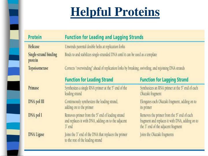 Helpful Proteins