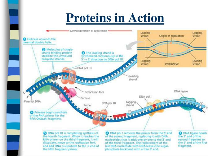 Proteins in Action