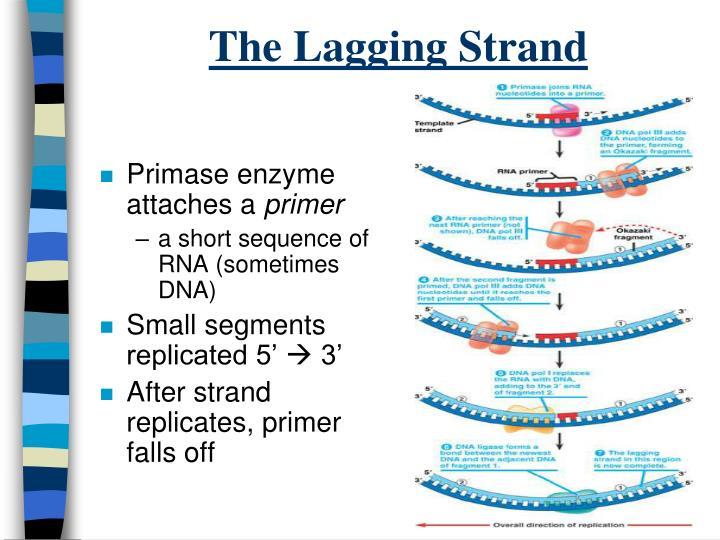 The Lagging Strand