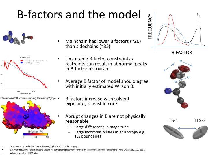 B-factors and the model