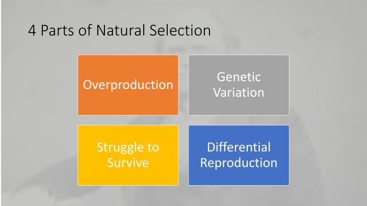 4 Parts of Natural Selection