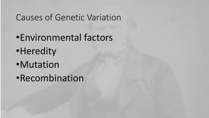 Causes of Genetic Variation