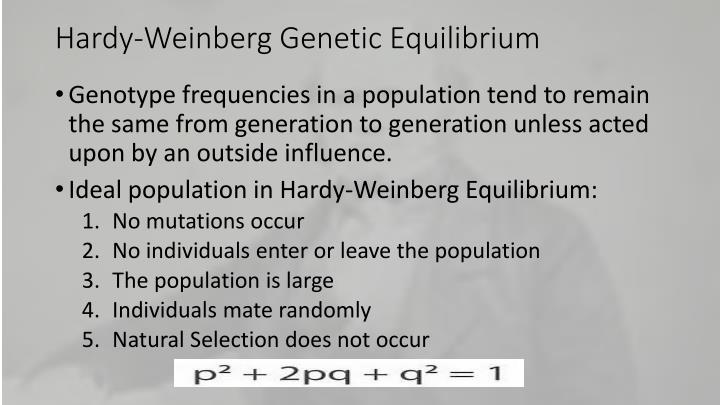 Hardy-Weinberg Genetic Equilibrium
