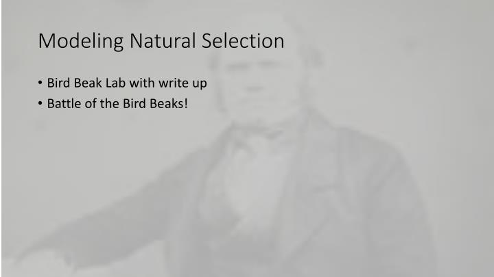 Modeling Natural Selection