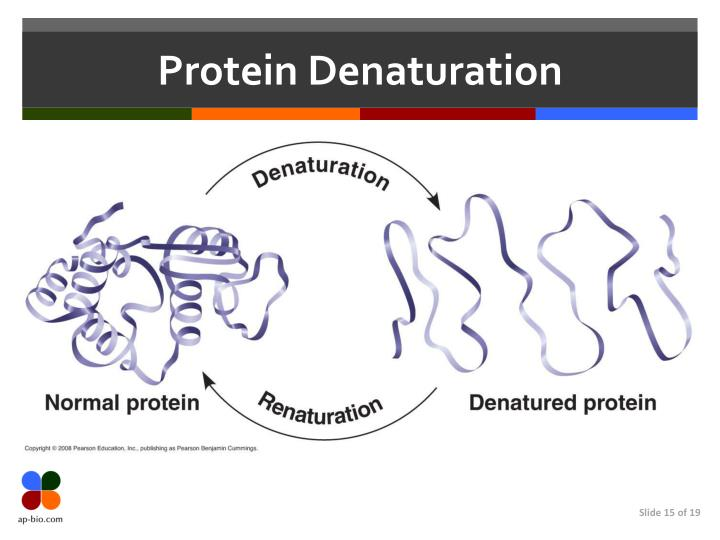 Protein Denaturation