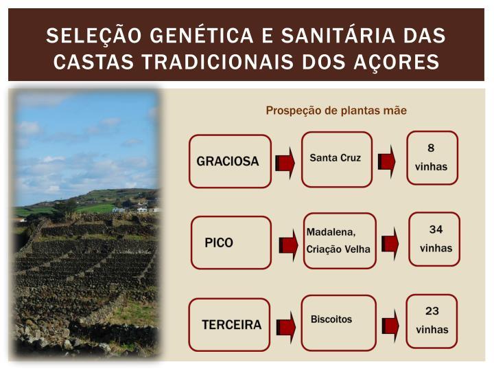 Seleção genética e sanitária das castas tradicionais dos açores