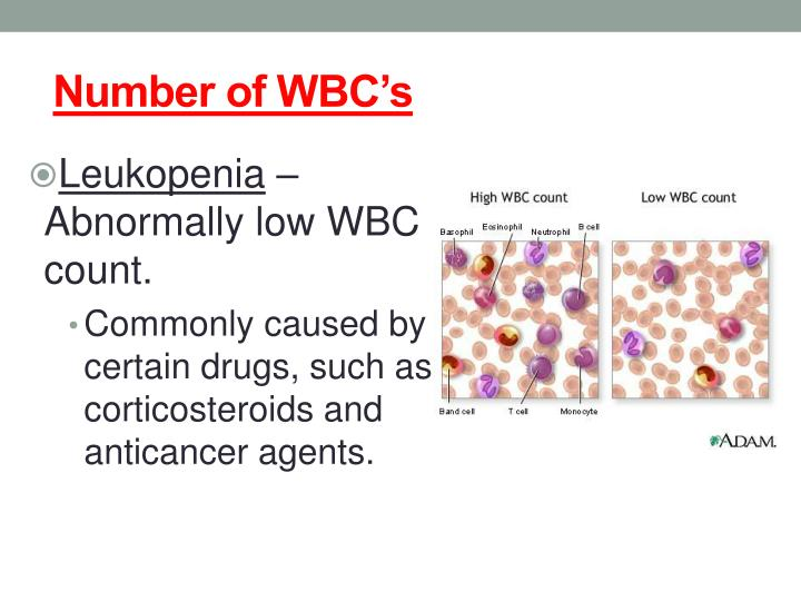 Number of WBC's