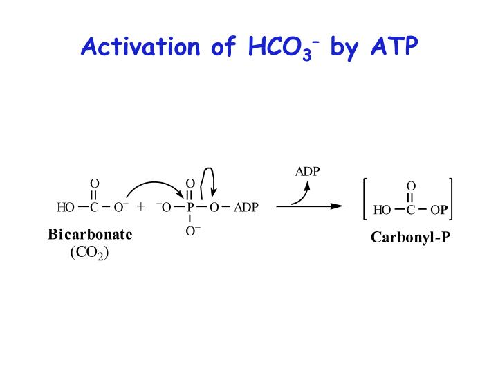 Activation of HCO