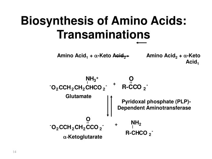 Biosynthesis of Amino Acids: