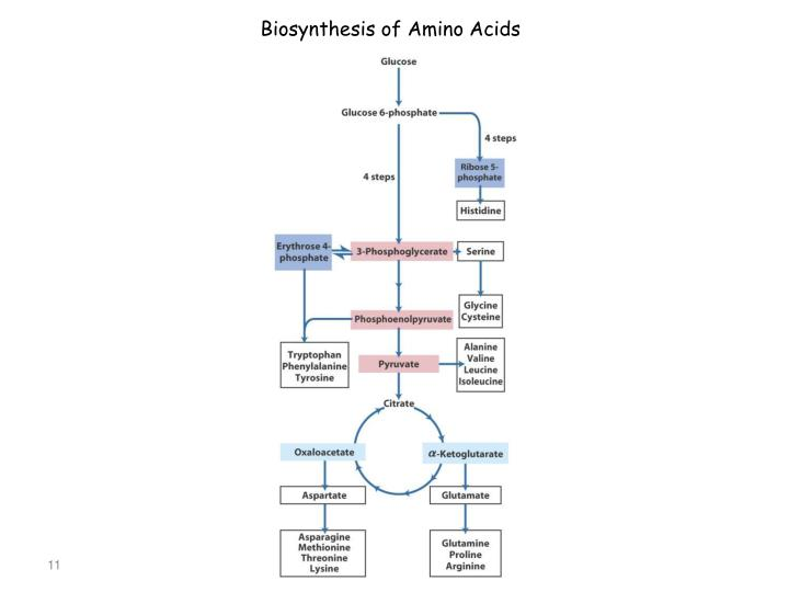 Biosynthesis of Amino Acids