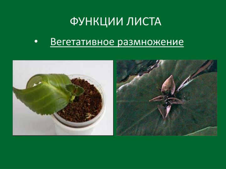 ФУНКЦИИ ЛИСТА