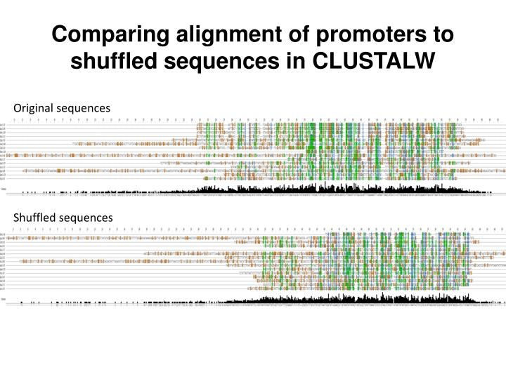 Comparing alignment of promoters to shuffled sequences in CLUSTALW