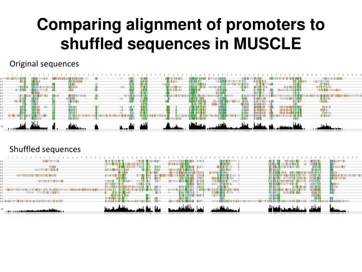 Comparing alignment of promoters to shuffled sequences in