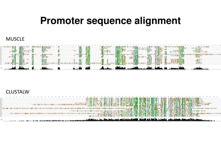 Promoter sequence alignment
