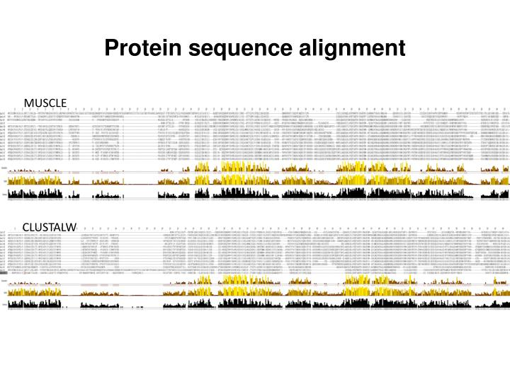 Protein sequence alignment
