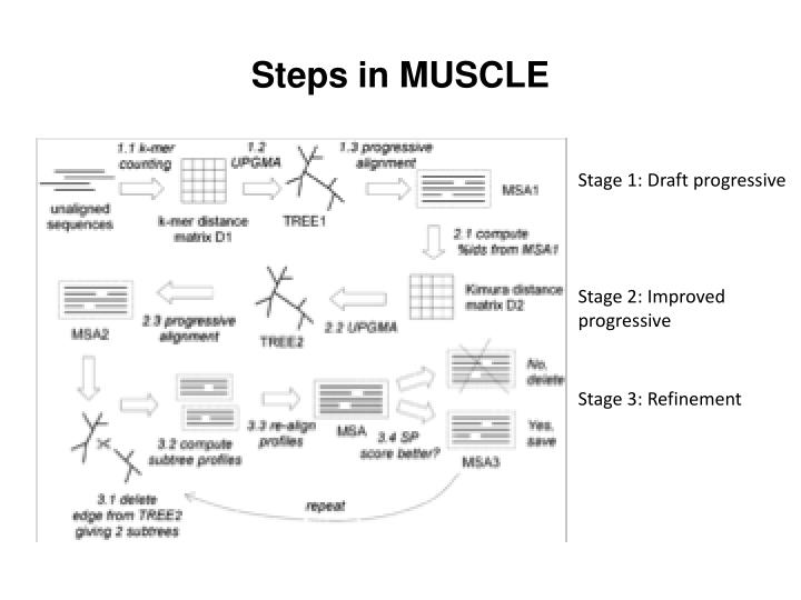 Steps in MUSCLE