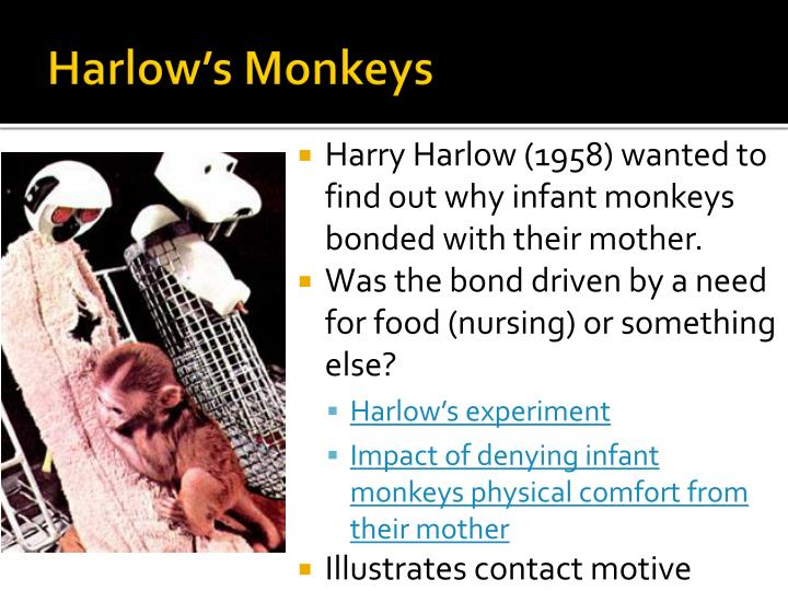 Harlow's Monkeys