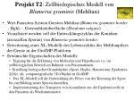 projekt t2 zellbiologisches modell von blumeria graminis mehltau