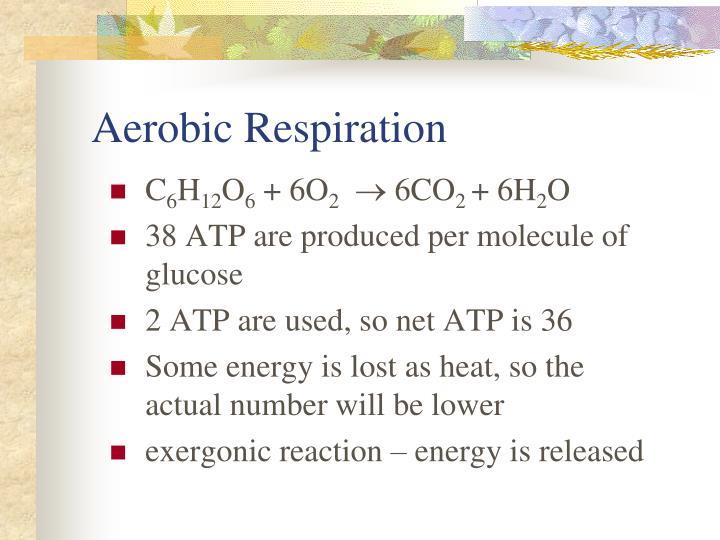 Aerobic Respiration