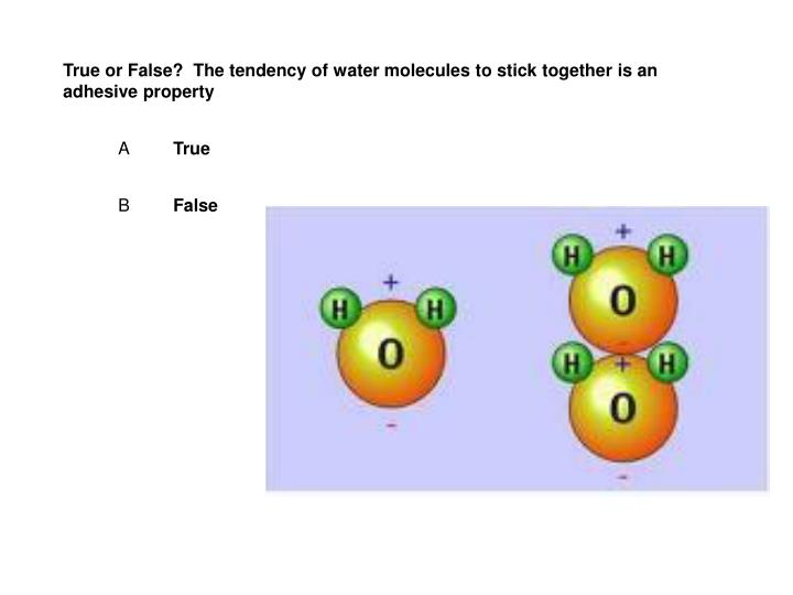 True or False?  The tendency of water molecules to stick together is an adhesive property