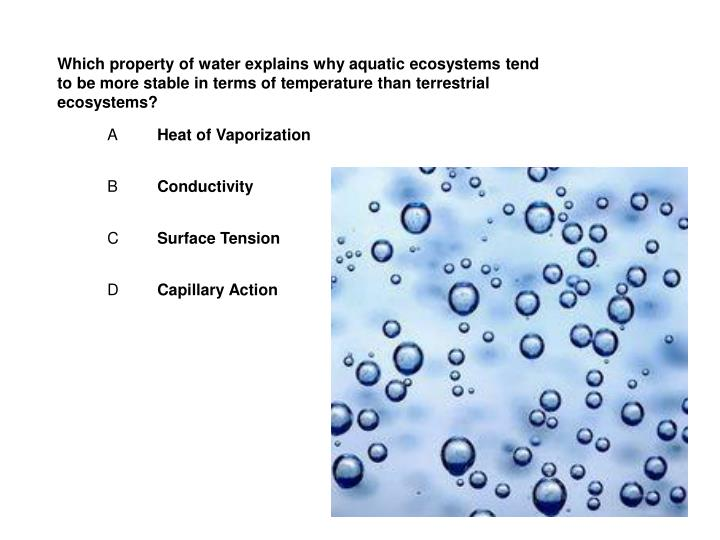 Which property of water explains why aquatic ecosystems tend to be more stable in terms of temperature than terrestrial ecosystems?