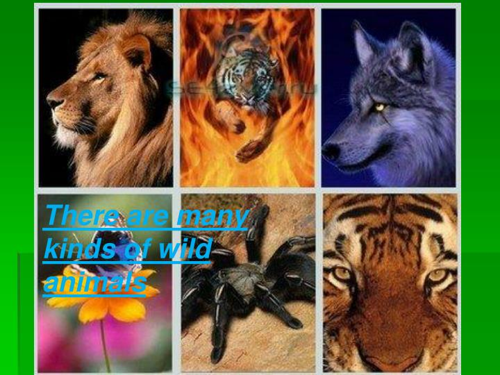 There are many kinds of wild animals
