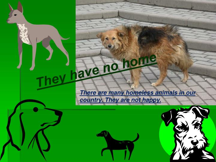 They have no home