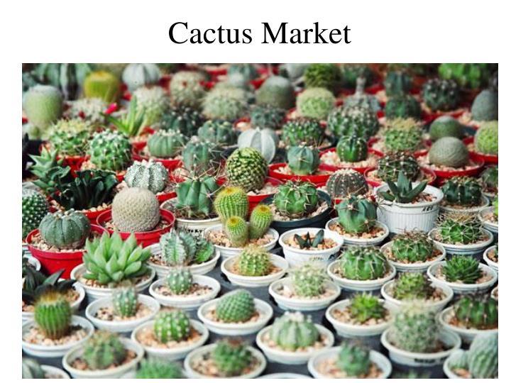 Cactus Market