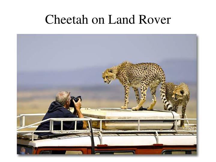 Cheetah on Land Rover