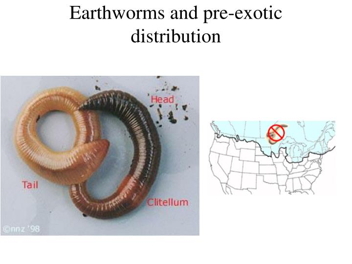 Earthworms and pre-exotic distribution